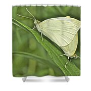 Cabbage White Butterflies 5267 Shower Curtain