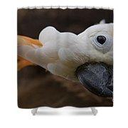 Cacatua Sulphurea Citrinocristata - Citron Crested Cockatoo Shower Curtain