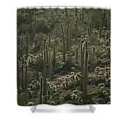 Cacti Near Tucson, Arizona Shower Curtain