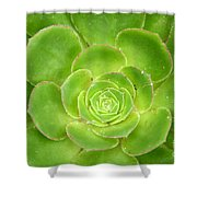 Cactus 11 Shower Curtain