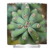 Cactus 25 Shower Curtain