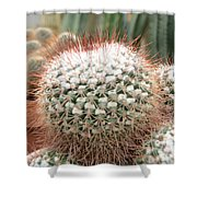 Cactus 43 Shower Curtain