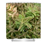 Cactus 59 Shower Curtain