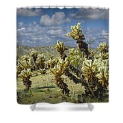 Cactus Also Called Teddy Bear Cholla Shower Curtain