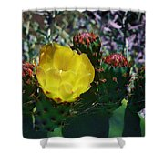 Cactus Blossom 8 Shower Curtain