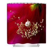 Cactus Flower Interior Shower Curtain