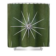 Cactus Spines, Saguaro National Park Shower Curtain