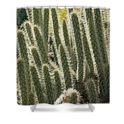 Cactus With Halos Shower Curtain
