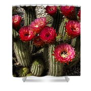 Cactus With Red Flowers Shower Curtain