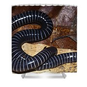 Caecilian Shower Curtain