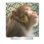Caged Prayer Shower Curtain