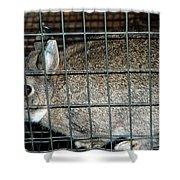 Caged Rabbit Shower Curtain