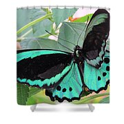 Butterfly Of Many Colors Shower Curtain