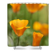 Cal Poppies Shower Curtain