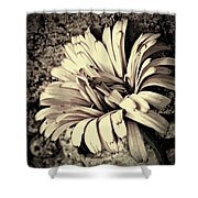 Calendula In Browns Shower Curtain