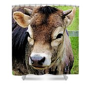 Calf Closeup Shower Curtain