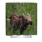 Calf Feeding Shower Curtain