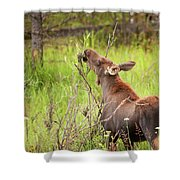 Calf In The Willows Shower Curtain