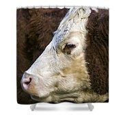 Calf Portrait Shower Curtain