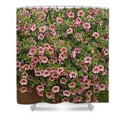Calibrachoa Calibrachoa Sp Noa Peach Shower Curtain