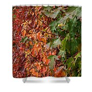 Calico By Nature Shower Curtain