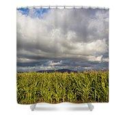 California Cornfield Shower Curtain