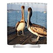 California Pelicans Shower Curtain