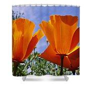 California Poppies Eschscholtzia Shower Curtain