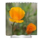 California Poppy Flowers Shower Curtain