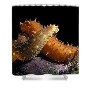 California Sea Cucumber Love Shower Curtain