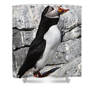 Call Of The Puffin Shower Curtain