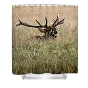Call Of The Wild 1 Shower Curtain