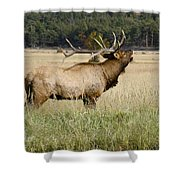 Call Of The Wild 2 Shower Curtain