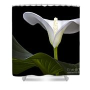 Calla Beauty Shower Curtain