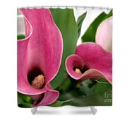 Calla Lilies In Pink Shower Curtain