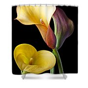 Calla Lilies Still Life Shower Curtain by Garry Gay