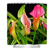 Calla Lillies Shower Curtain