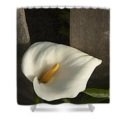 Calla Lily And Fence Shower Curtain