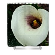 Calla Lily Candle Center Shower Curtain