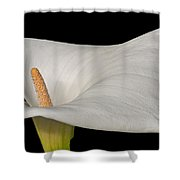 Calla Lily Flower Shower Curtain