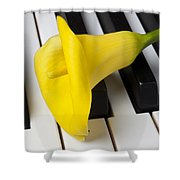 Calla Lily On Keyboard Shower Curtain