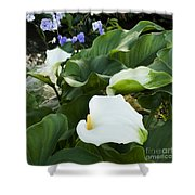 Callas At River Shower Curtain