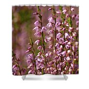 Calluna Vulgaris 2 Shower Curtain