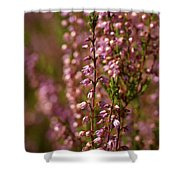 Calluna Vulgaris Shower Curtain