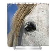Camargue Horse Equus Caballus Eye Shower Curtain