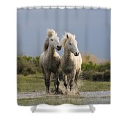 Camargue Horse Equus Caballus Pair Shower Curtain