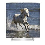 Camargue Horse Equus Caballus Running Shower Curtain