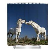 Camargue Horse Equus Caballus Stallions Shower Curtain