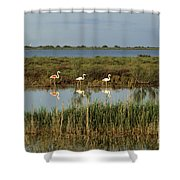 Camargue.etang Of Vacarres Shower Curtain