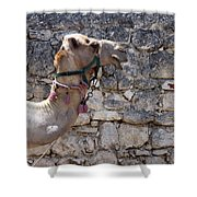 Camel At Sebastia Shower Curtain